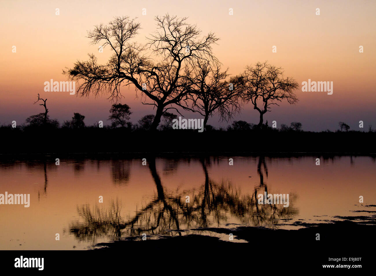 Trees reflected in still water at sunset - Stock Image
