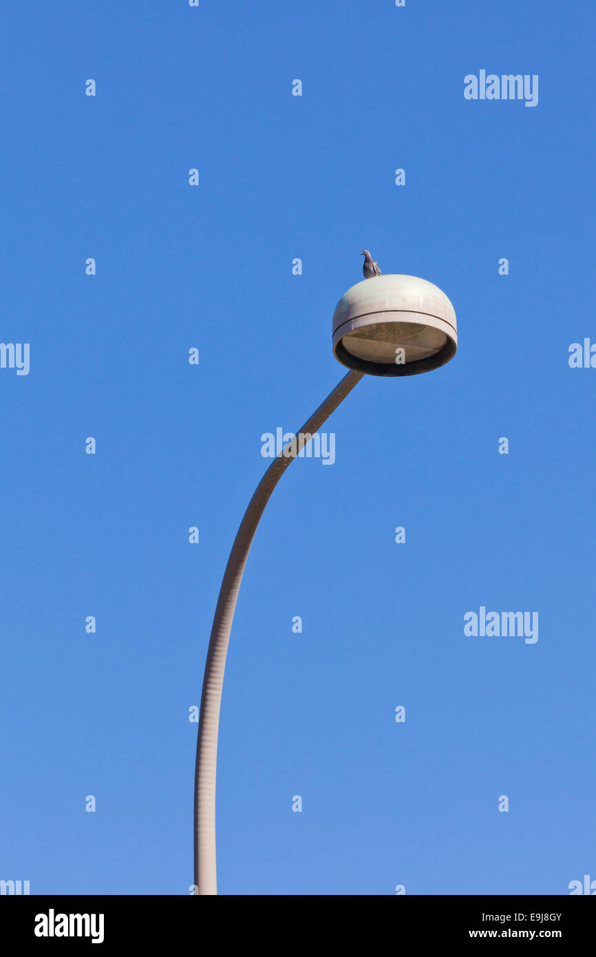 Pigeon sitting atop streetlight - USA - Stock Image