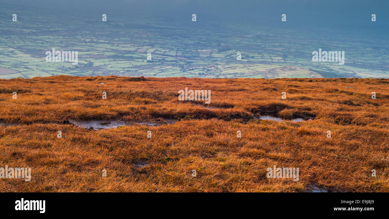 Bioggy heathland in winter, high on Mount Leinster, Blackstairs Mountains, County Carlow - Stock Image