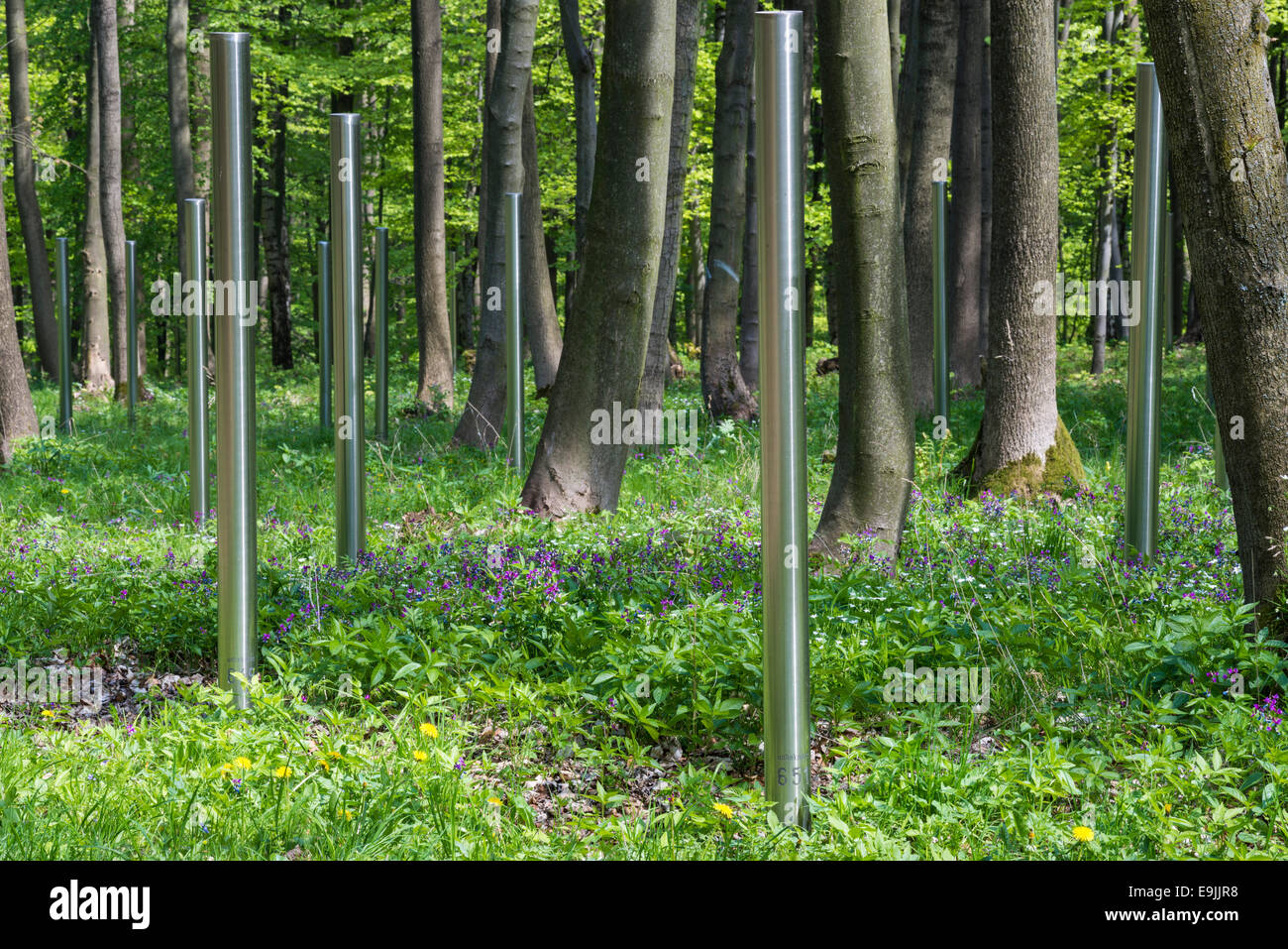 Buchenwald Memorial, numbered stainless steel stelae in the woods, symbolic grave stones for the dead of the Soviet - Stock Image