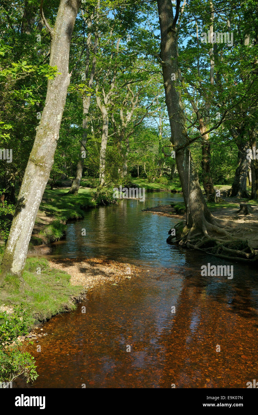 Ober Water at Ober Bridge, New Forest Stock Photo