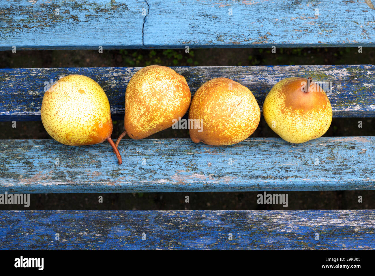 Four ripe pears in a line siting on a bench waiting to be eaten. Stock Photo