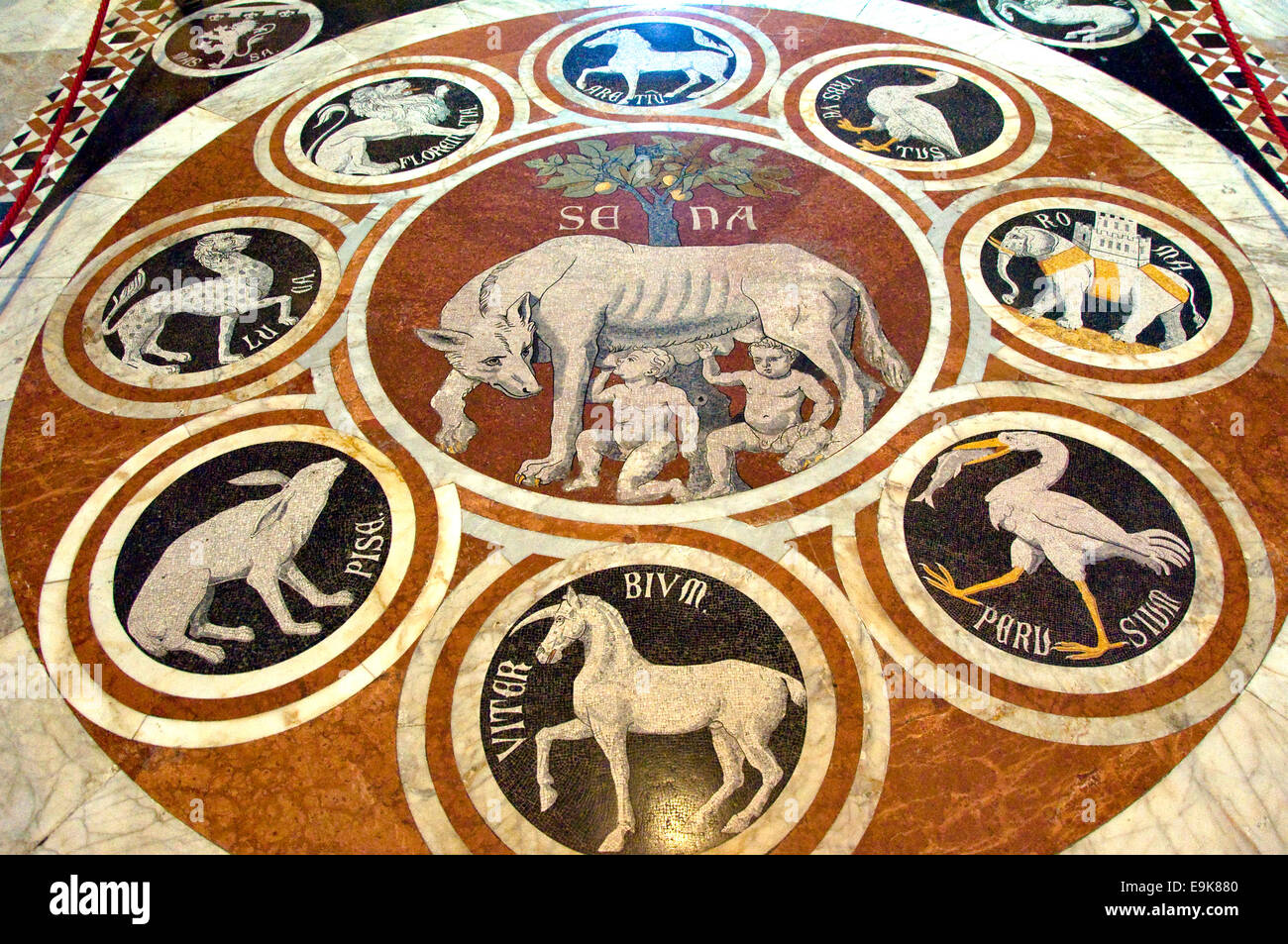The She-Wolf of Siena Mosaic Floor, Siena Cathedral, Tuscany, Italy - Stock Image