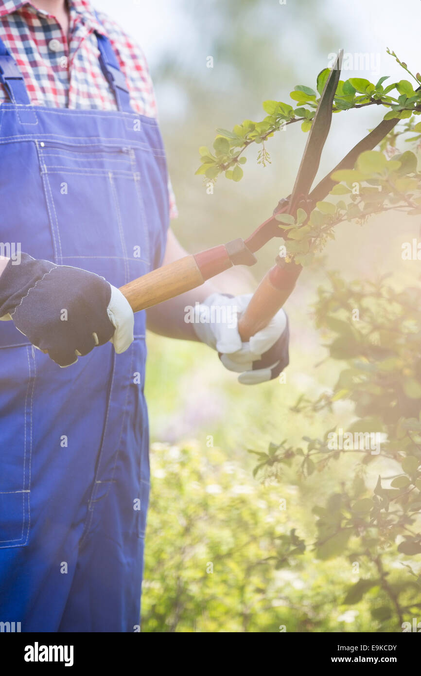 Midsection of gardener trimming branches at plant nursery - Stock Image