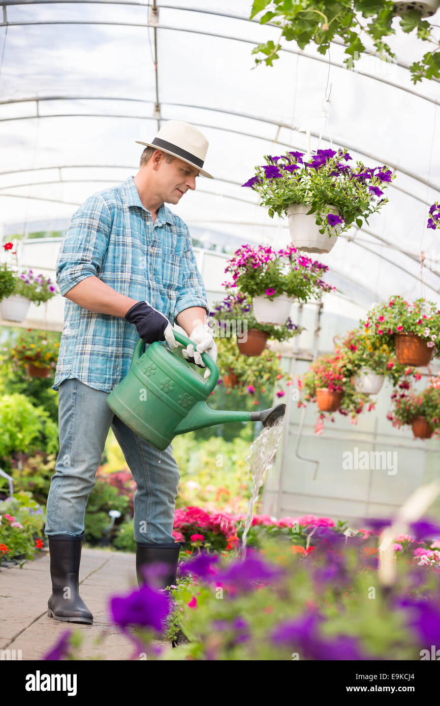 Full-length of man watering flower plants in greenhouse - Stock Image