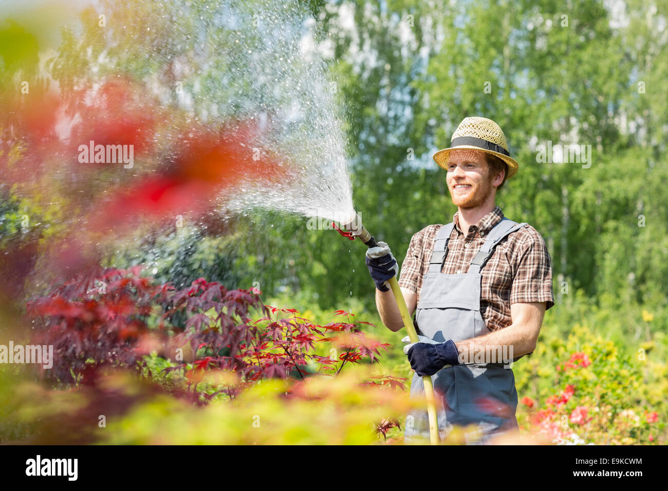 Smiling man watering plants at garden - Stock Image
