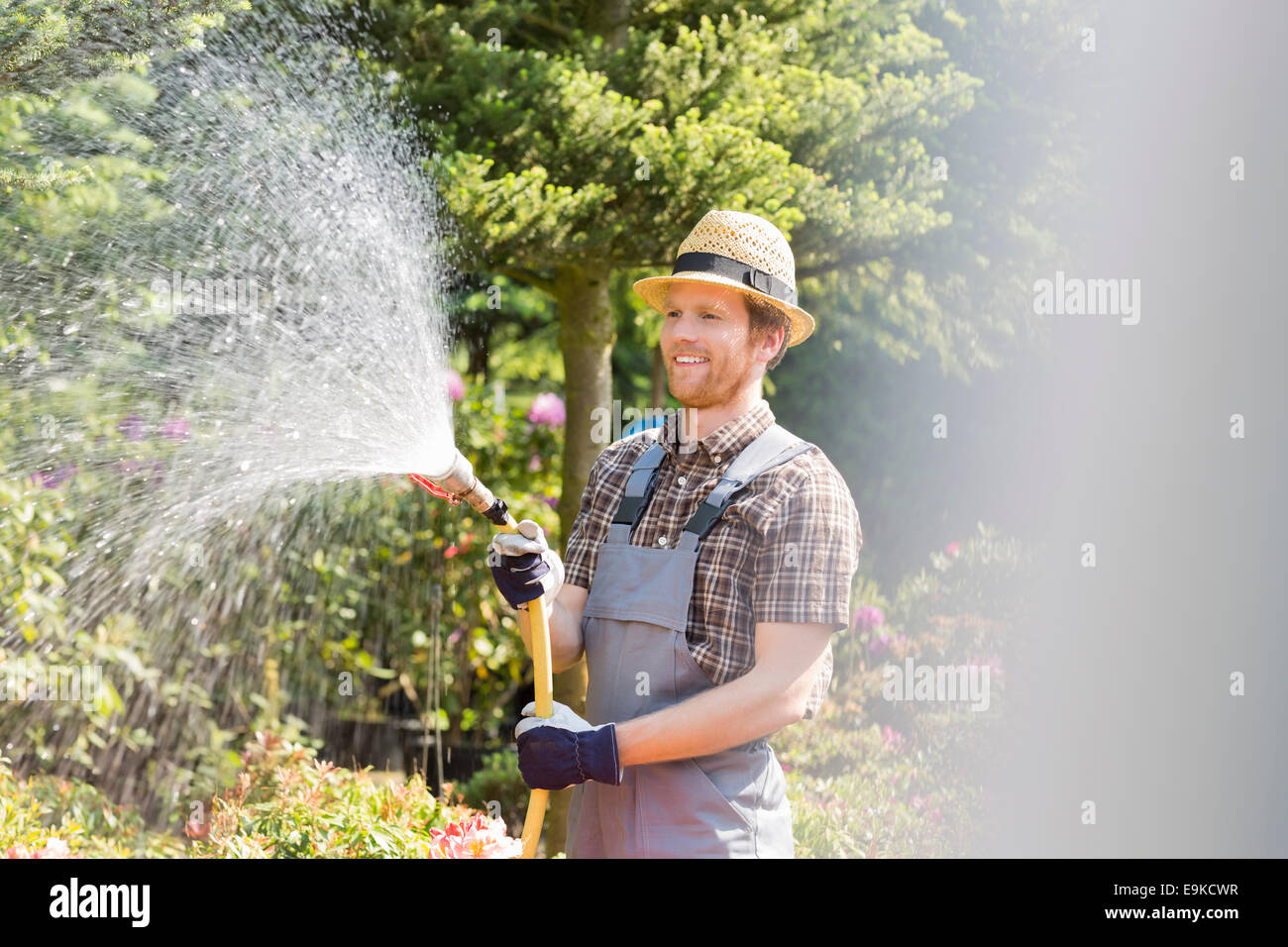 Happy man watering plants at garden - Stock Image