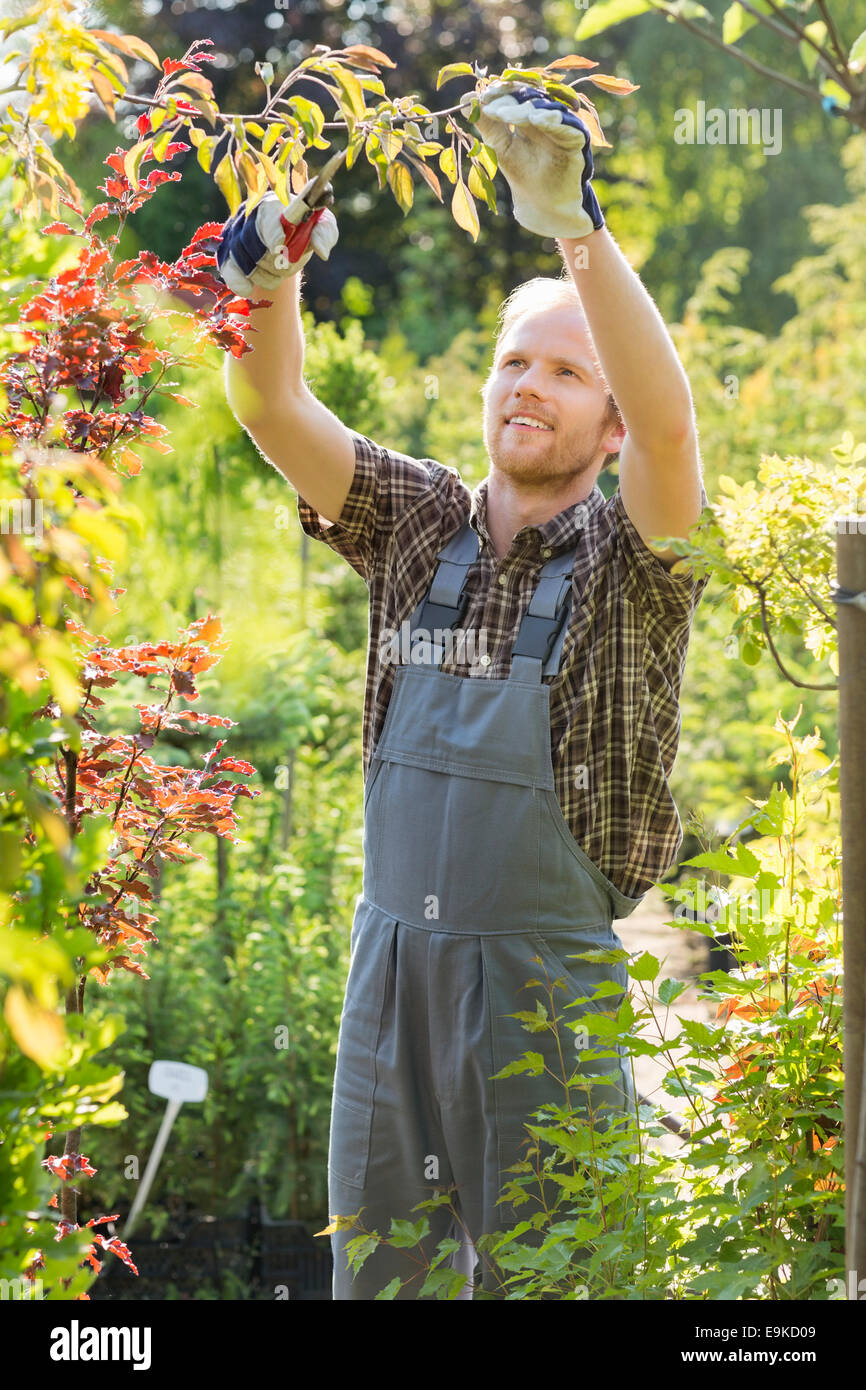 Man clipping branch at plant nursery - Stock Image
