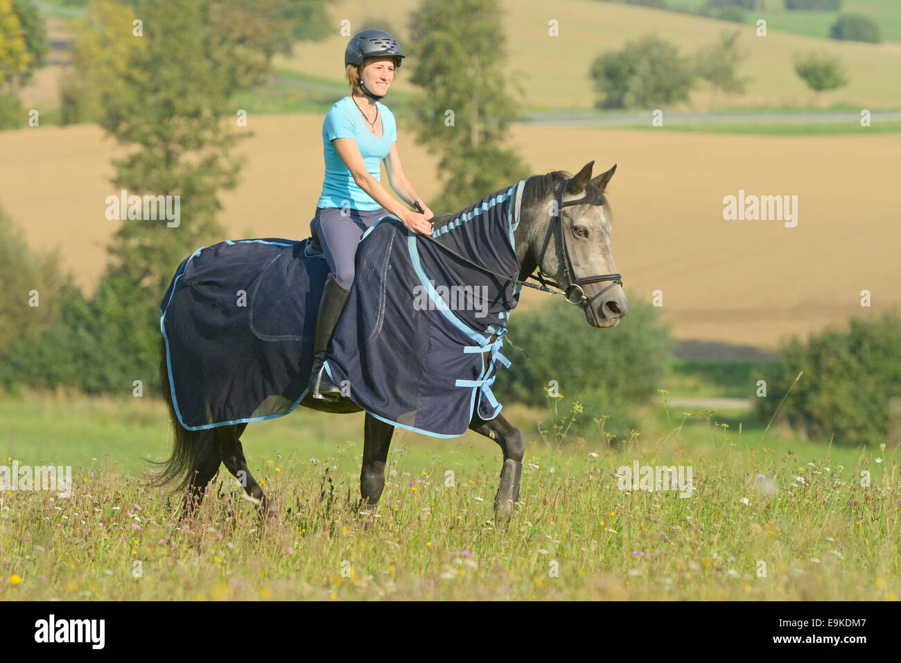 Ride out in summer on a Connemara pony wearing a fly sheet - Stock Image