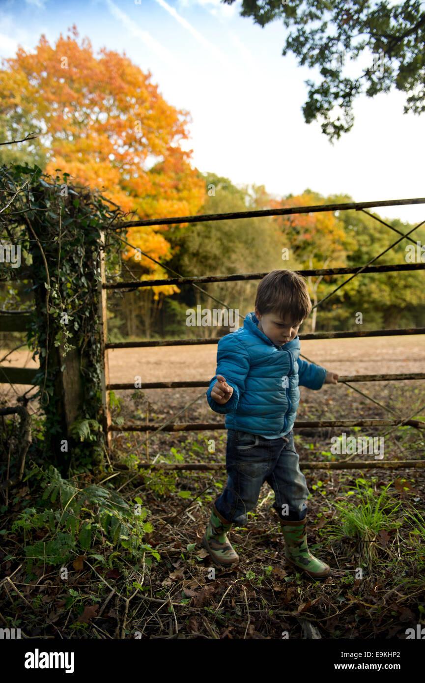 Autumn colour in Michaelwood, Gloucestershire UK Stock Photo