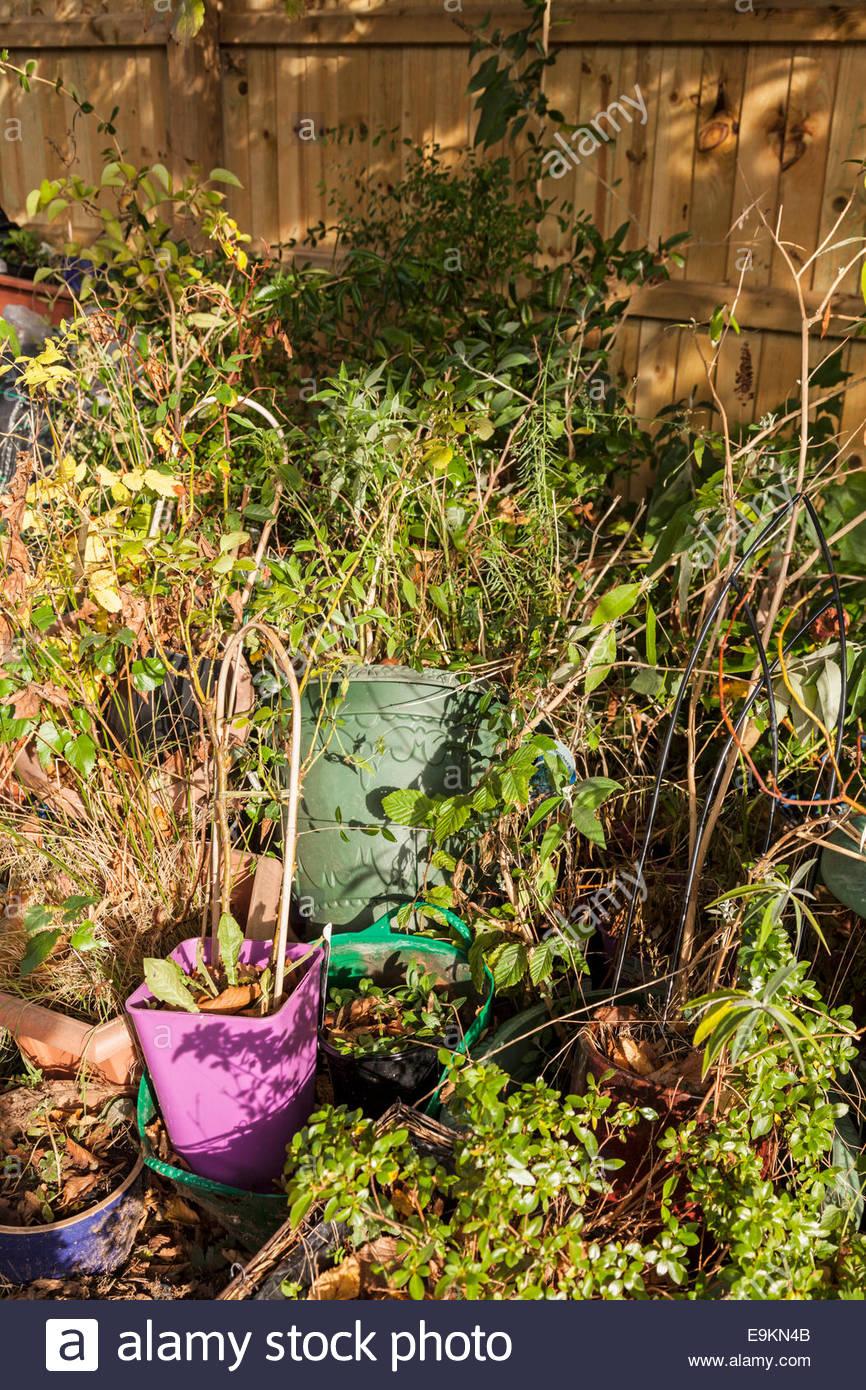 Unkempt or untidy garden - Stock Image