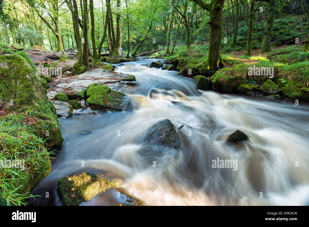 Golitha Falls a magical forest cascade on the southern edge of Bodmin Moor in Cornwall - Stock Image