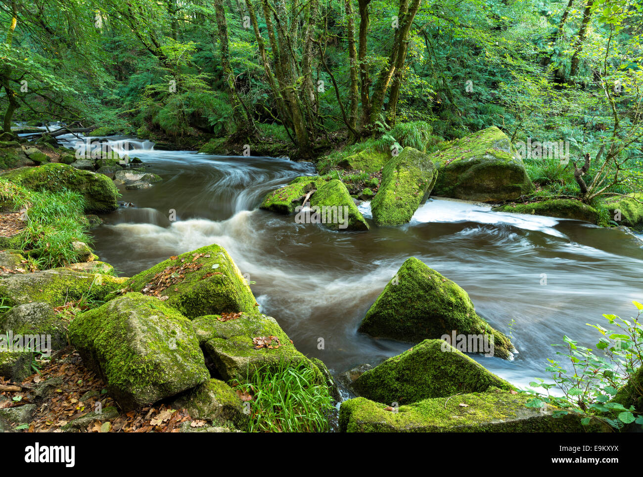 The river Fowey flowing through Bodmin Moor in Cornwall at Golitha Falls - Stock Image