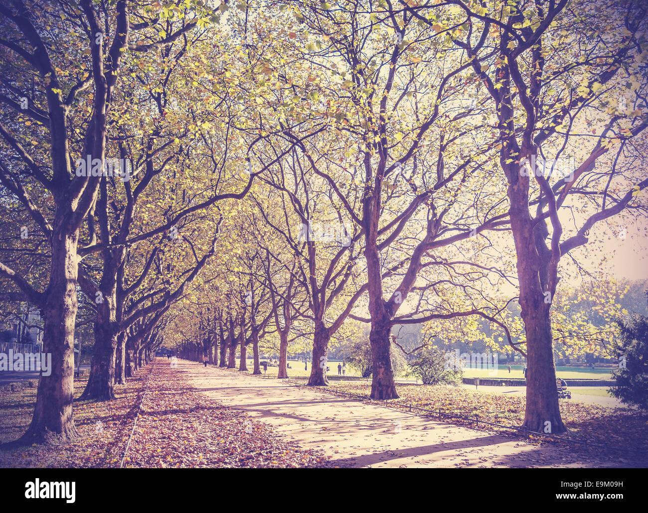 Vintage filtered picture of an autumn in park. - Stock Image