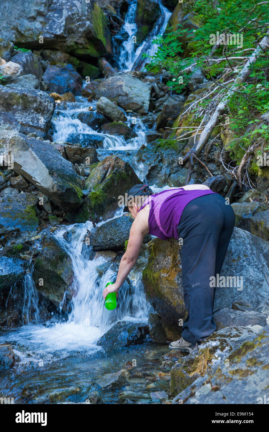 Woman collects drinking water from stream,  Garibaldi Provincial Park, British Columbia, Canada - Stock Image