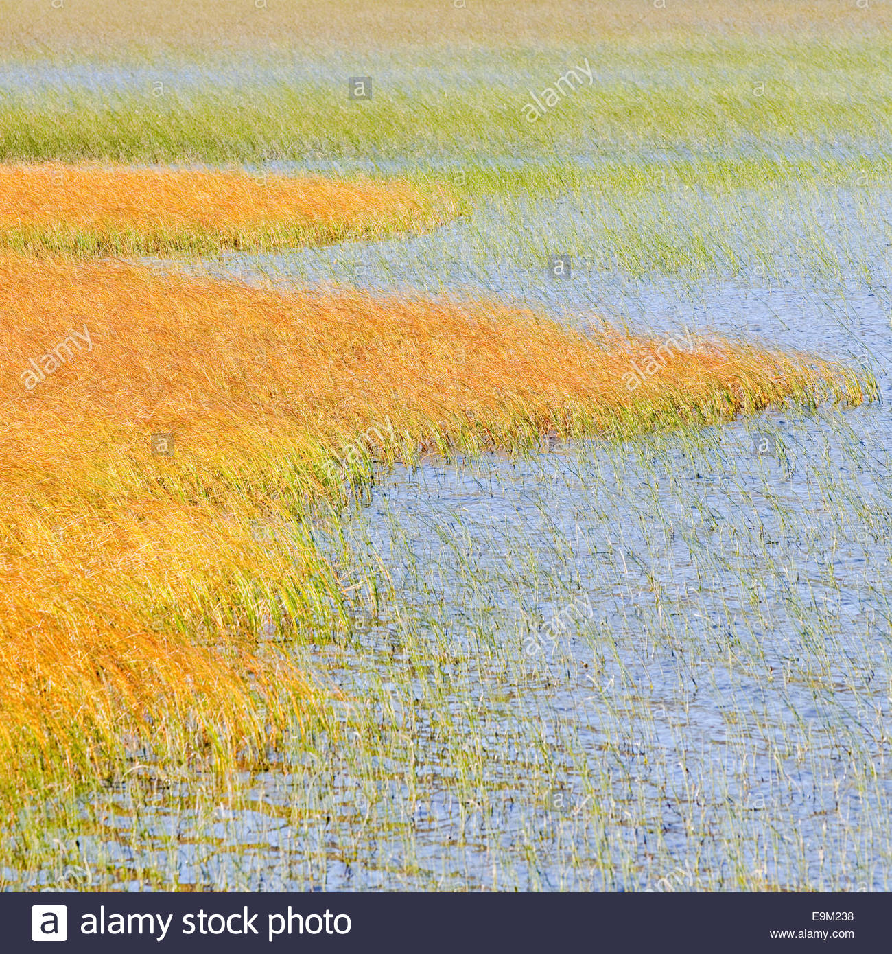 Colorful yellow and green and blue - Stock Image