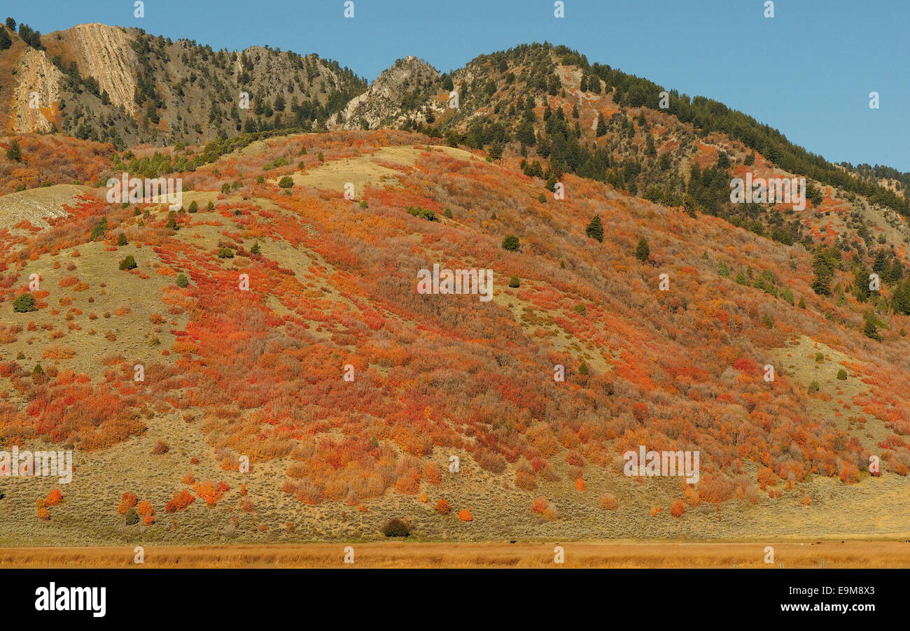 Orange and Red Bushes on Hillside in Autumn - Stock Image
