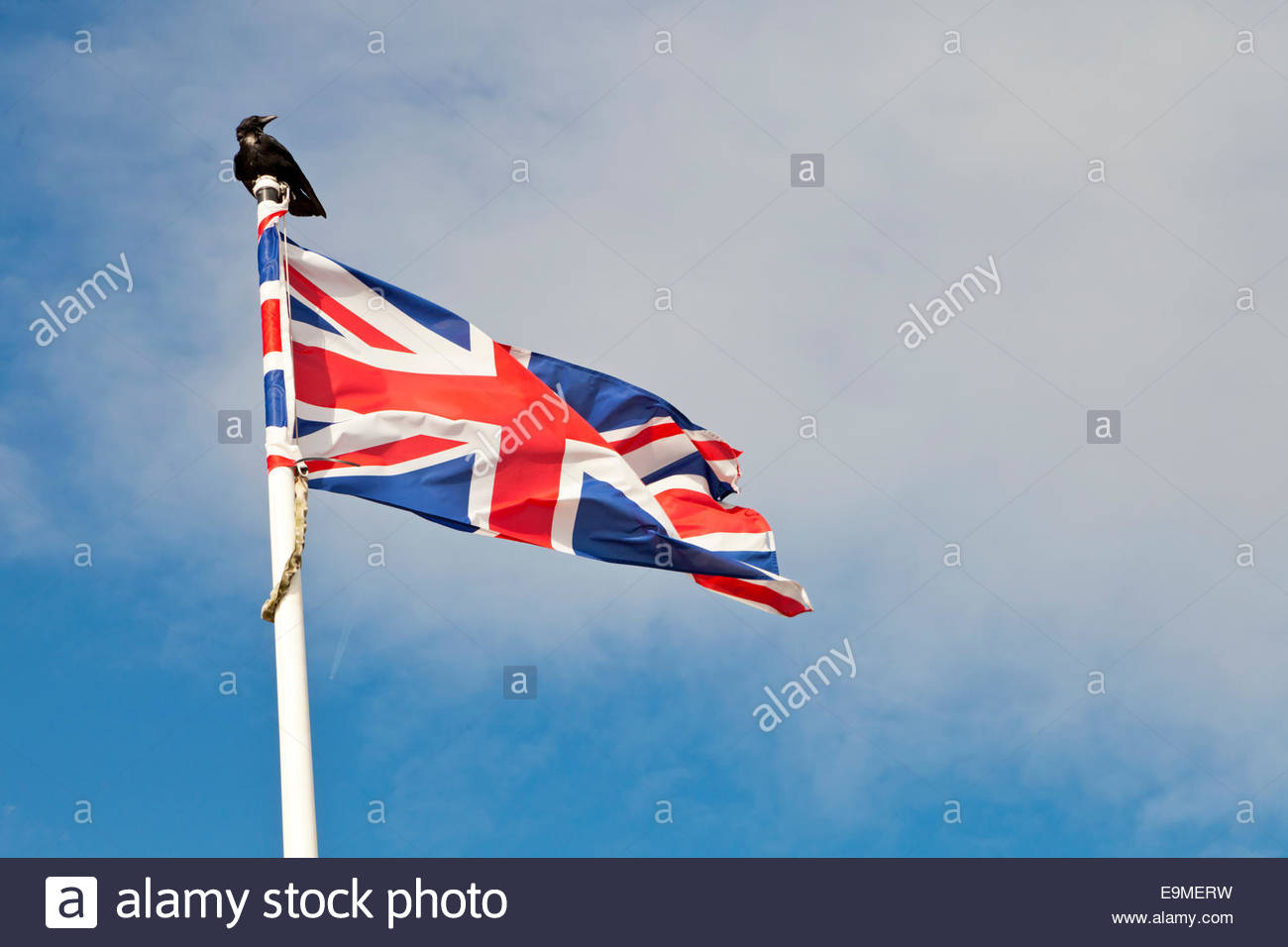 A carrion crow Corvus corone perched on a union jack flagpole, concept dark, threatening, sinister. Brexit metaphor - Stock Image