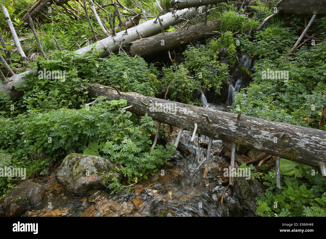 Protected forest Feldberg Black Forest Germany Stock Photo