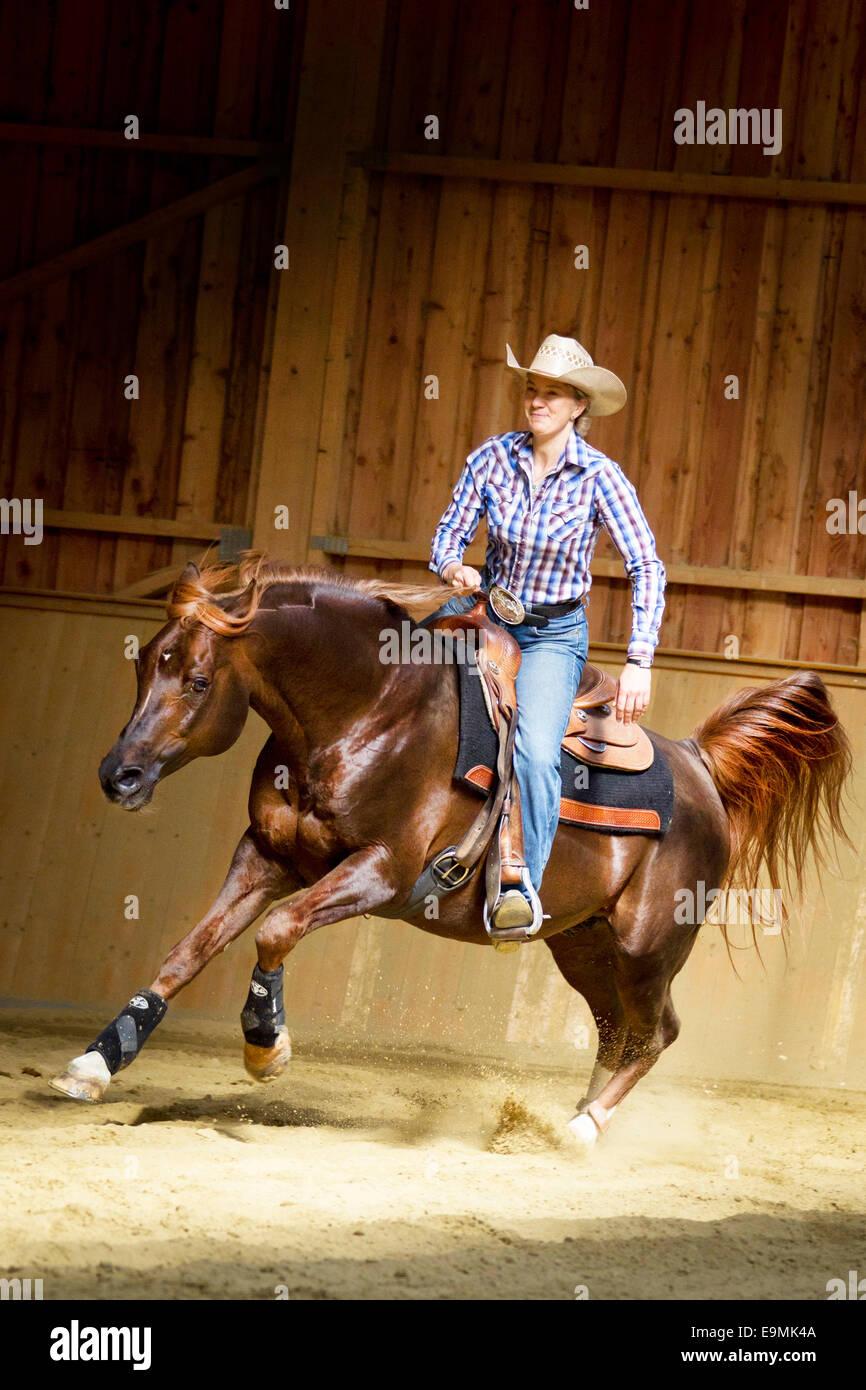 Arabian Horse Chestnut Stallion Rider But Without Any Tack Full Stock Photo Alamy