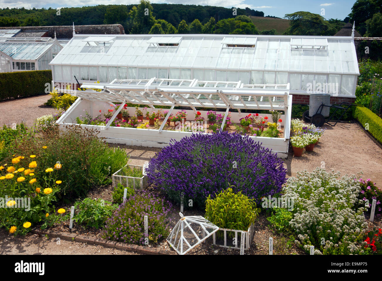 Some of the victorian glasshouses and cold frames in the walled kitchen garden at West Dean Gardens, West Sussex, - Stock Image
