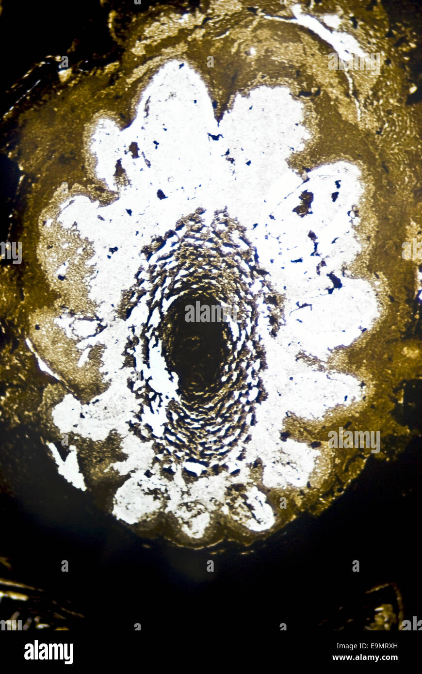 Microscopic soot particles - Stock Image