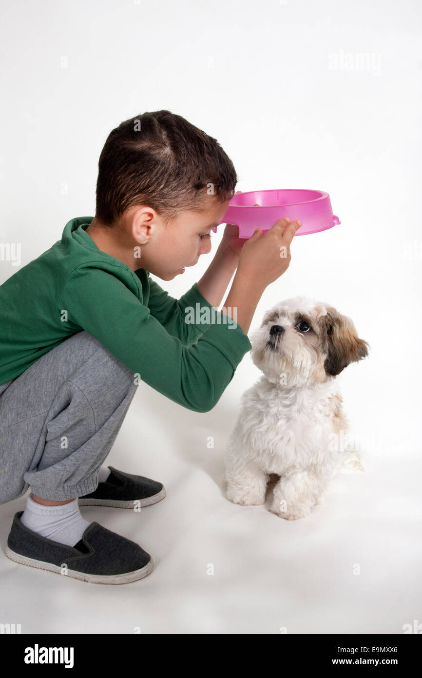 Child Single Boy Feeding Shih Tzu Terrier Puppy Studio Uk Stock
