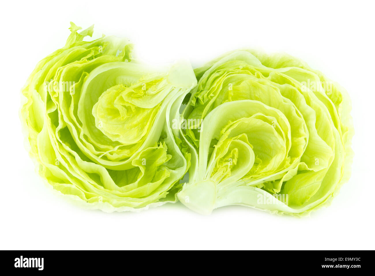 Green Iceberg lettuce - Stock Image