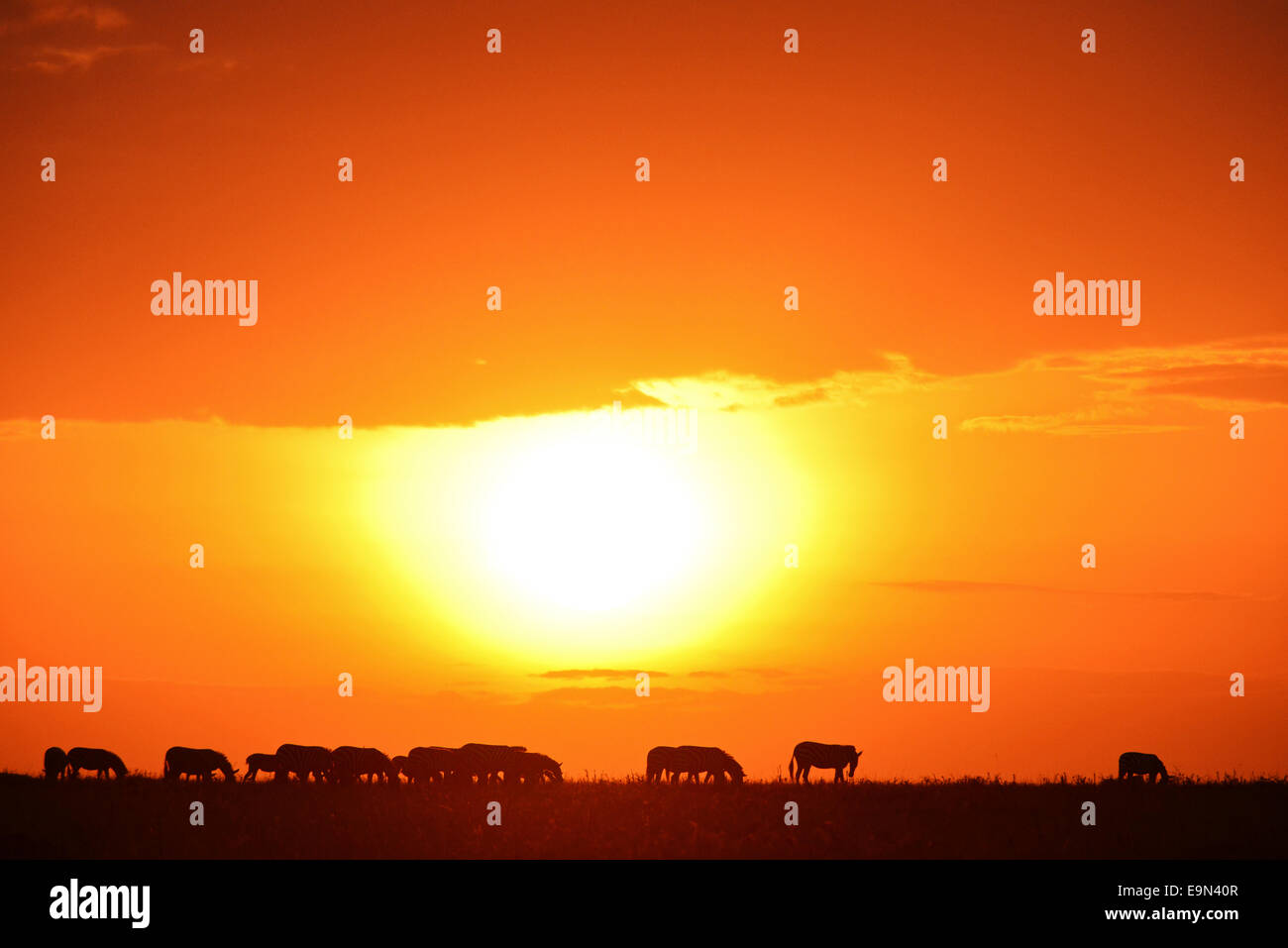 Masai Mara Sunrise - Stock Image