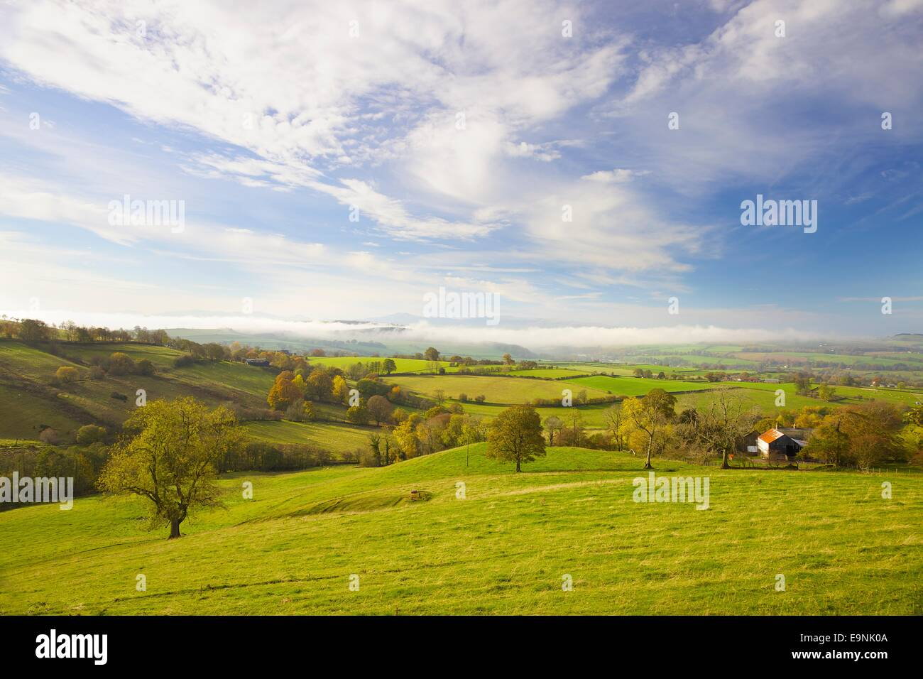 Tree in rural evening scene, Eden Valley in Cumbria, near Ainstable looking towards The Lake District. Autumn Stock Photo