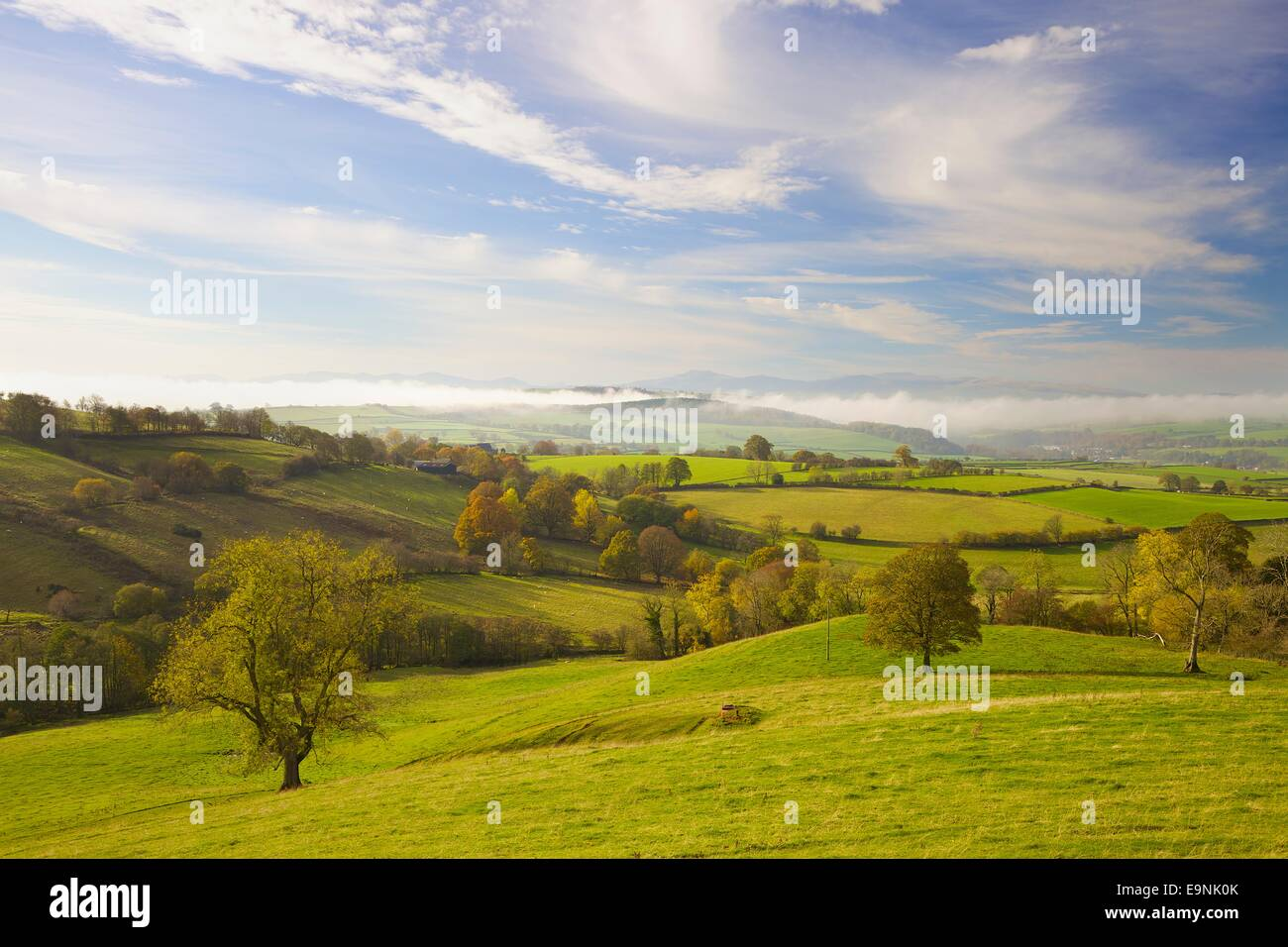 Tree in rural evening scene, Eden Valley in Cumbria, near Ainstable looking towards The Lake District. Autumn - Stock Image