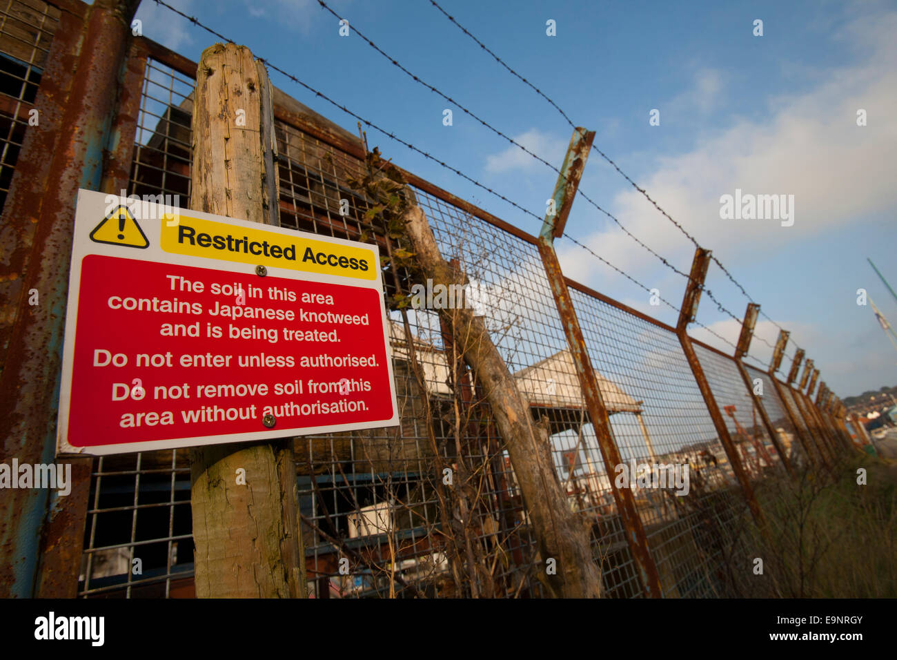 Restricted Access sign Japanese Knotweed treatment area industrial Isle of Wight - Stock Image