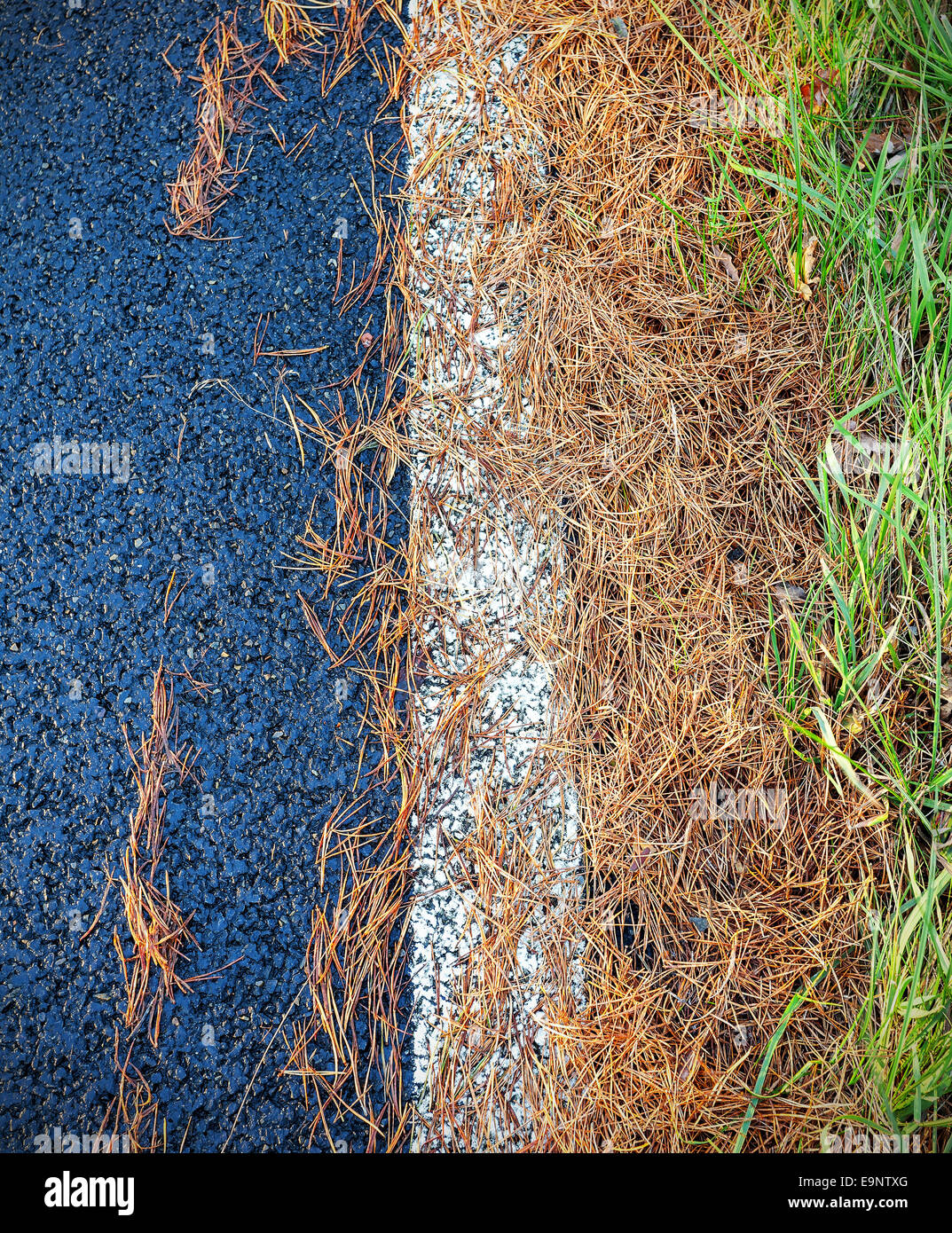 Conifer needles on asphalt road, abstract background. - Stock Image