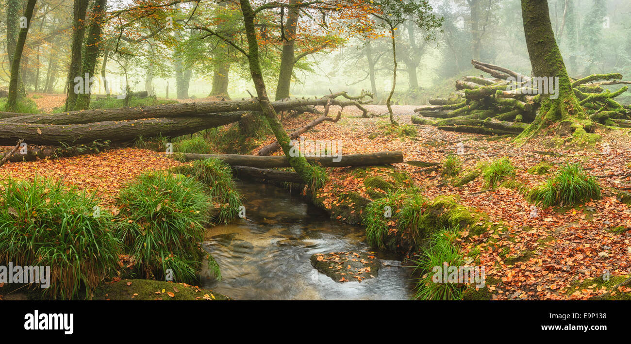 Foggy Autumn woodlnad at Golitha Falls on Bodmin Moor in Cornwall - Stock Image