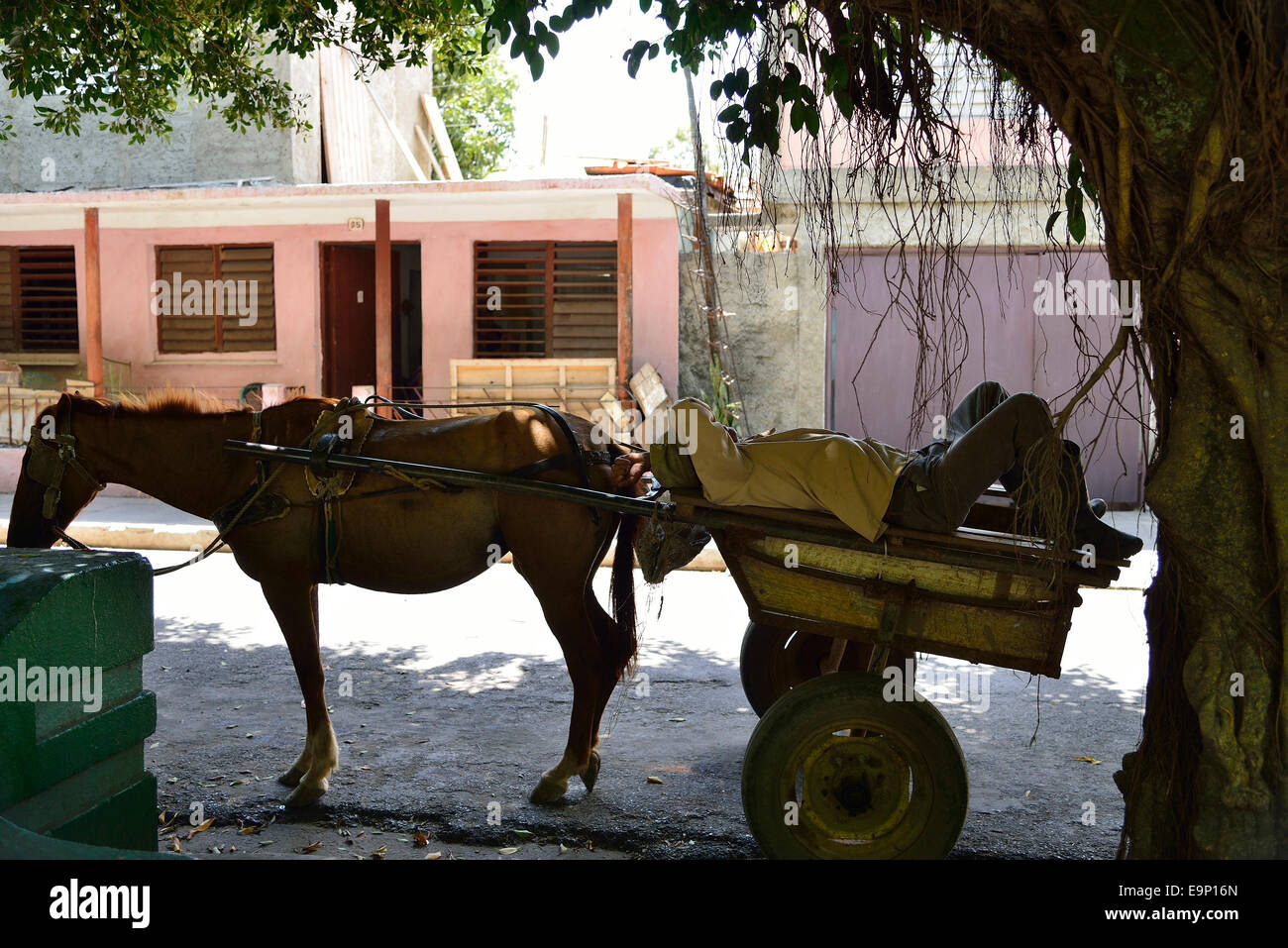 Siesta time, man having a nap on his horse and trap - Stock Image
