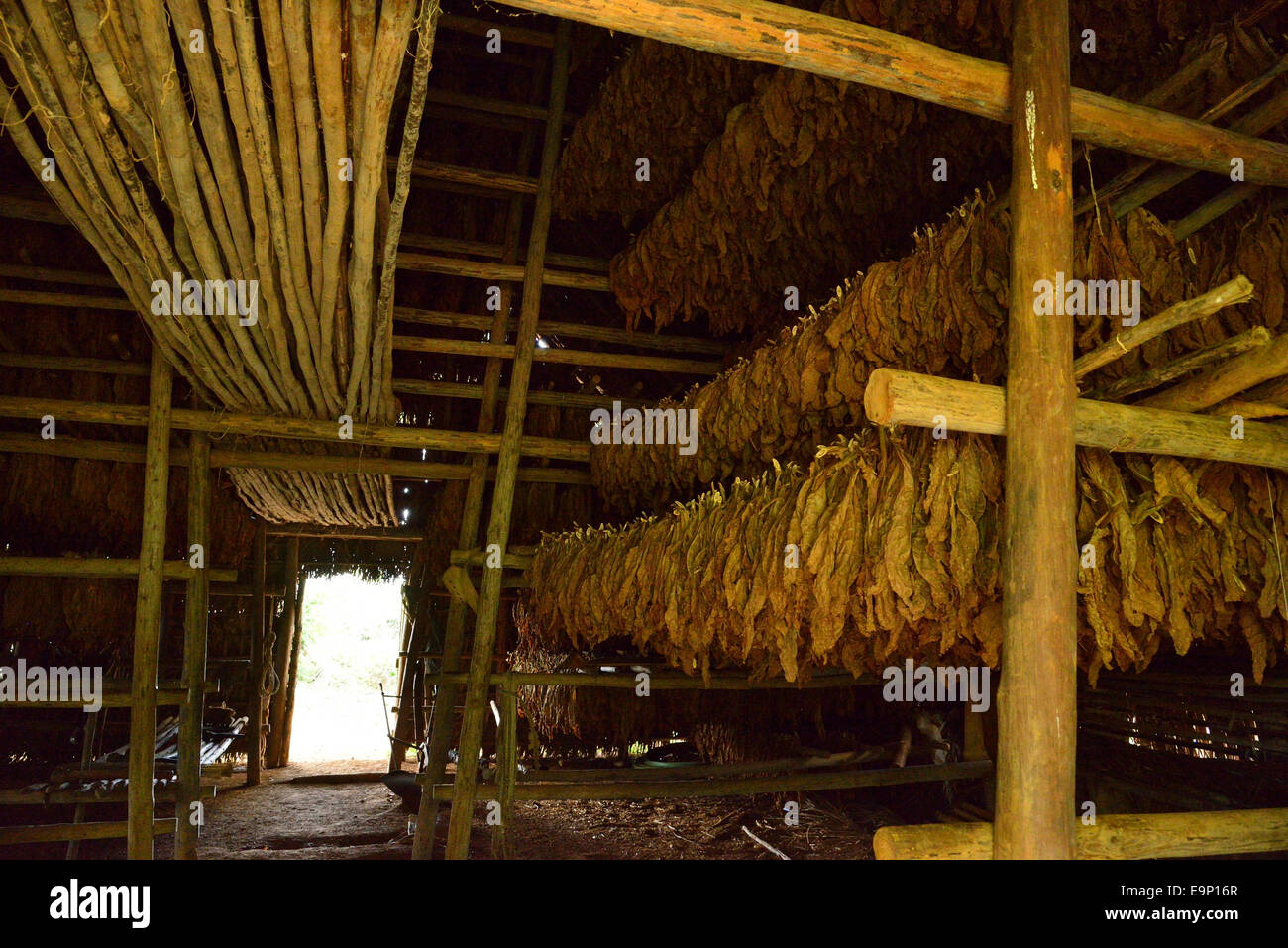 Tobacco drying or curing barn - Stock Image