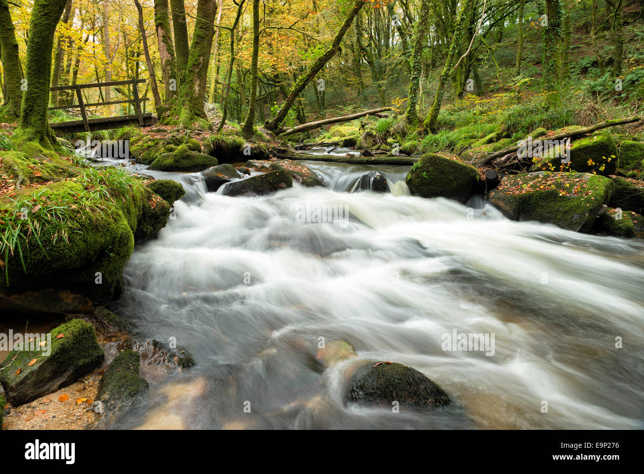 Autumn woods at Golitha Falls on Bodmin Moor in Cornwall - Stock Image