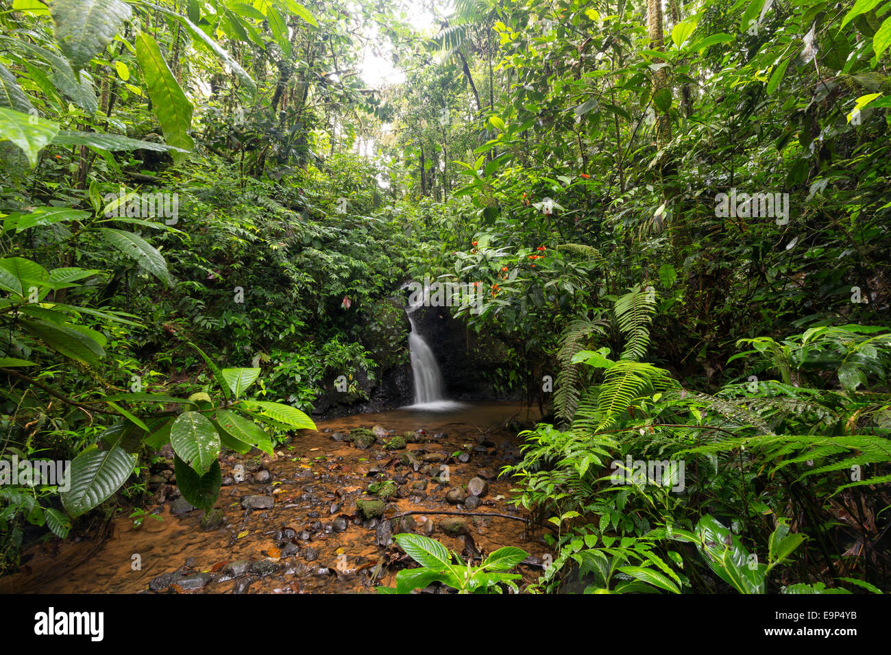 Rainforest waterfall in a humid gully close to Sumaco National Park, Ecuador - Stock Image