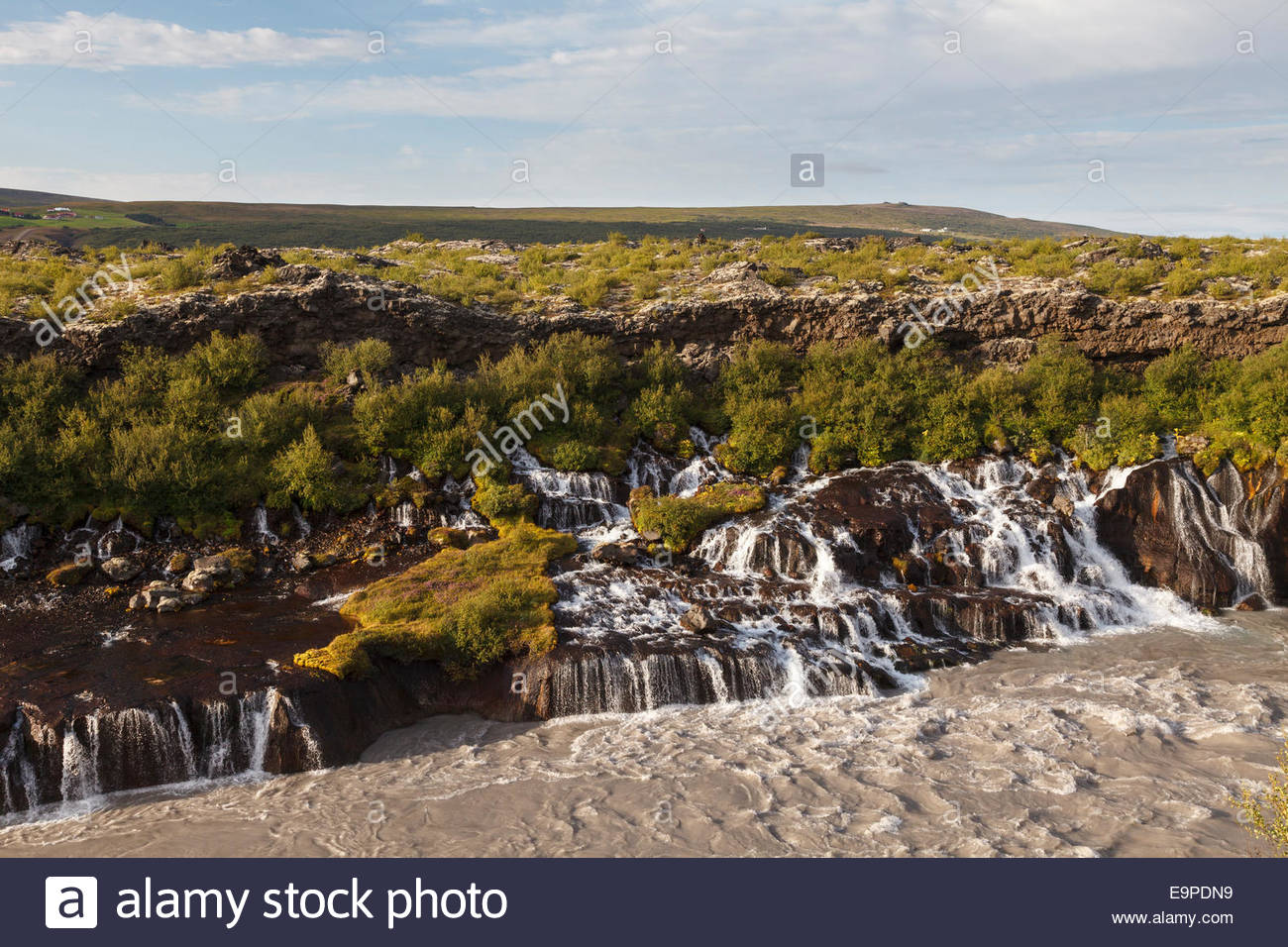Hraunfossar (lava falls) near Borgarnes consist of water cascading out of a lava field into the river Hvítá - Stock Image