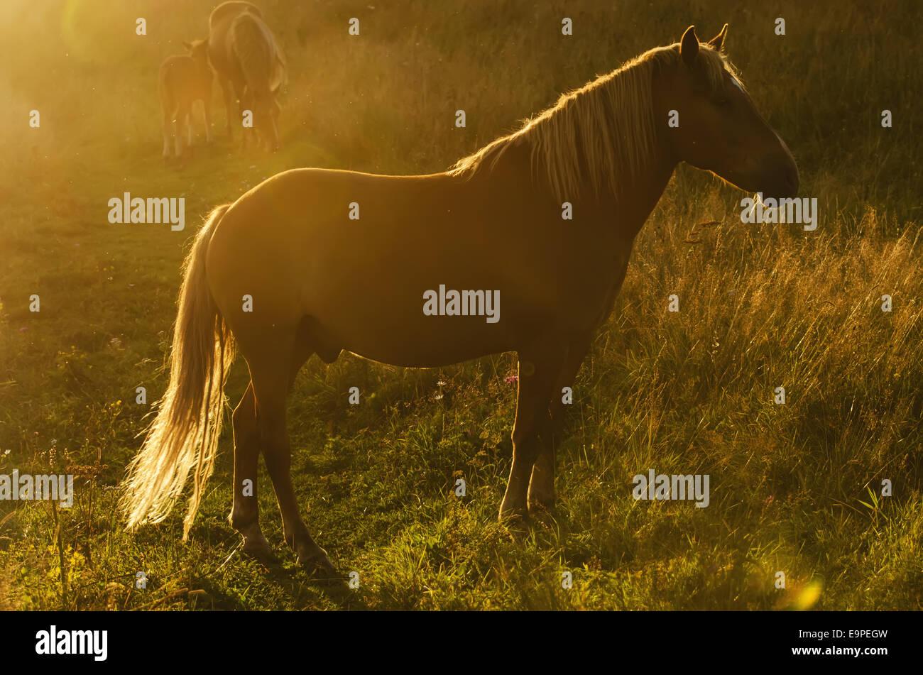 Magic horse - Stock Image