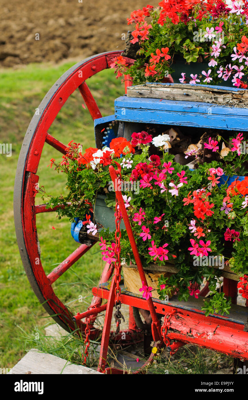 Old colorful seeding machine decorated by flowers. Aythorpe Roding, Essex, England, UK - Stock Image