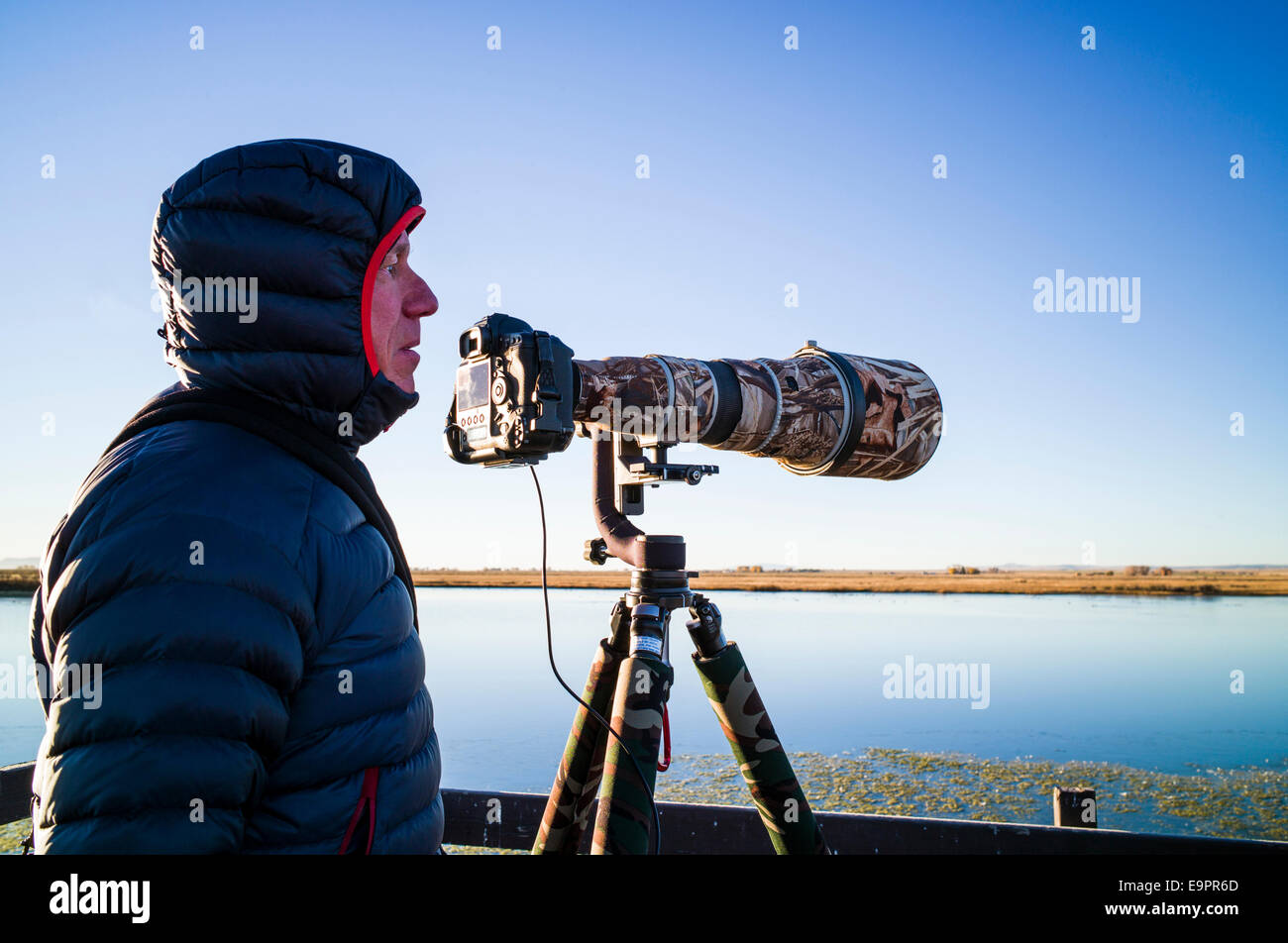 Professional photographer with long telephoto lens capturing wildlife, Monte Vista National Wildlife Refuge, Central - Stock Image