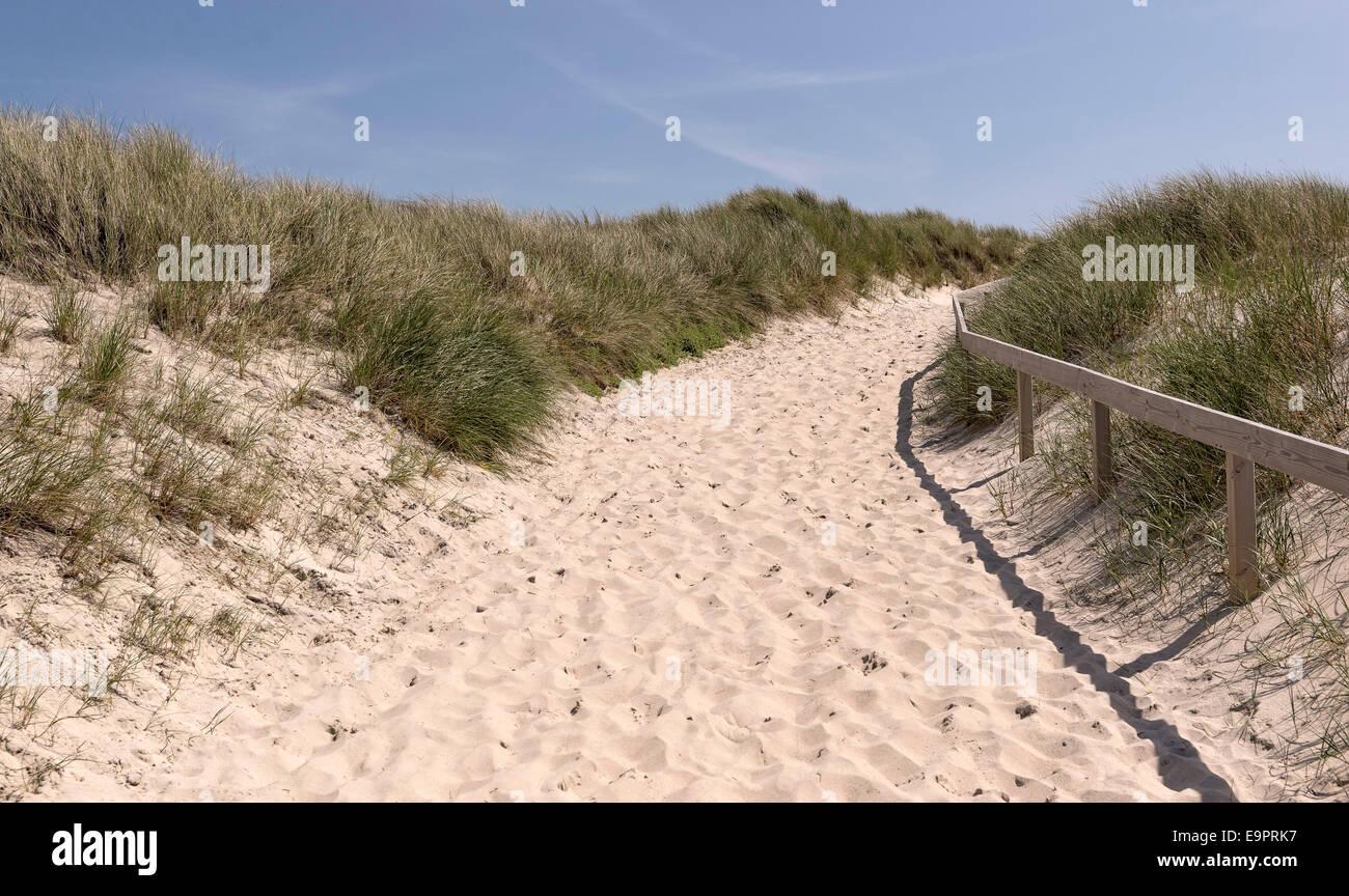 Weg durch die Duenen bei der Ortschaft Kampen/Insel Sylt /10.06.2014 Foto: Stephan Goerlich - Stock Image