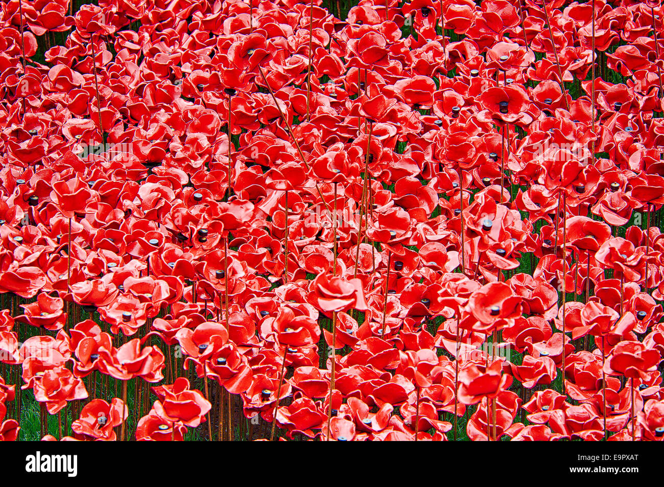Close up of the poppies at the Blood Swept Lands and Seas of Red installation at the Tower of London - Stock Image