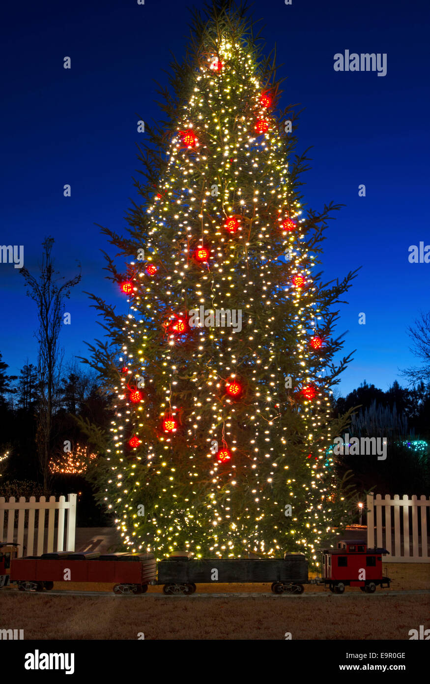 Outdoor christmas trees have been decorated with red and white outdoor christmas trees have been decorated with red and white lights and shot against a brilliant blue sky aloadofball Image collections