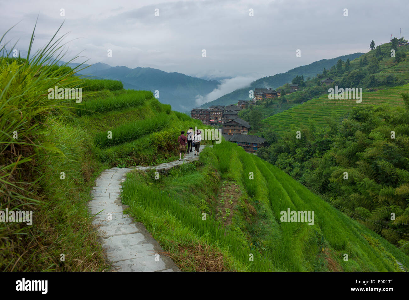 Longsheng Rice Terrace, Dragon's Backbone, Longji, China. Stock Photo