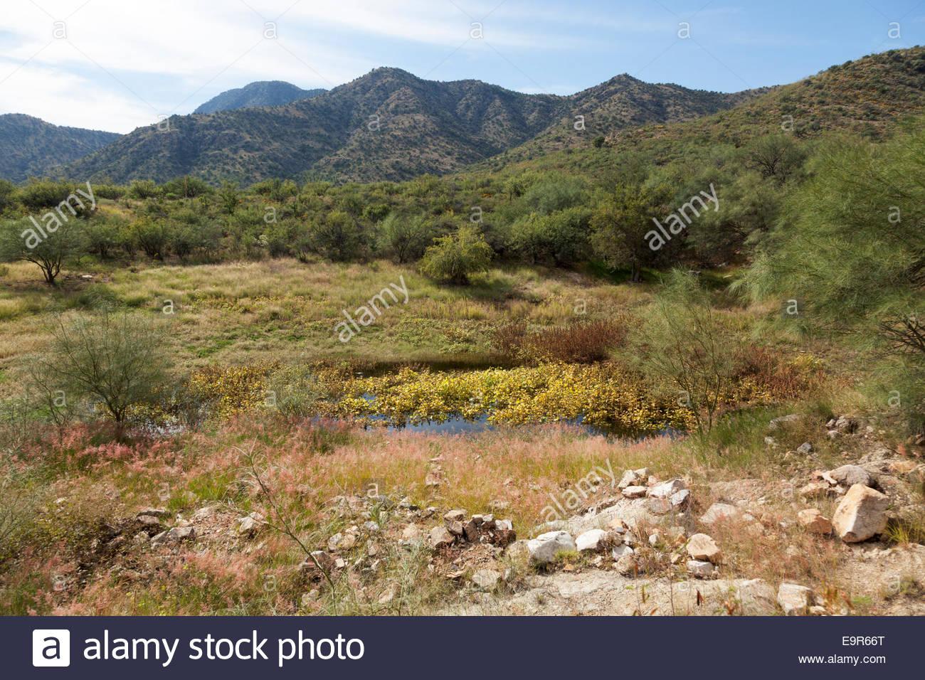 Desert mountains Stock tank watering hole  Arizona - Stock Image