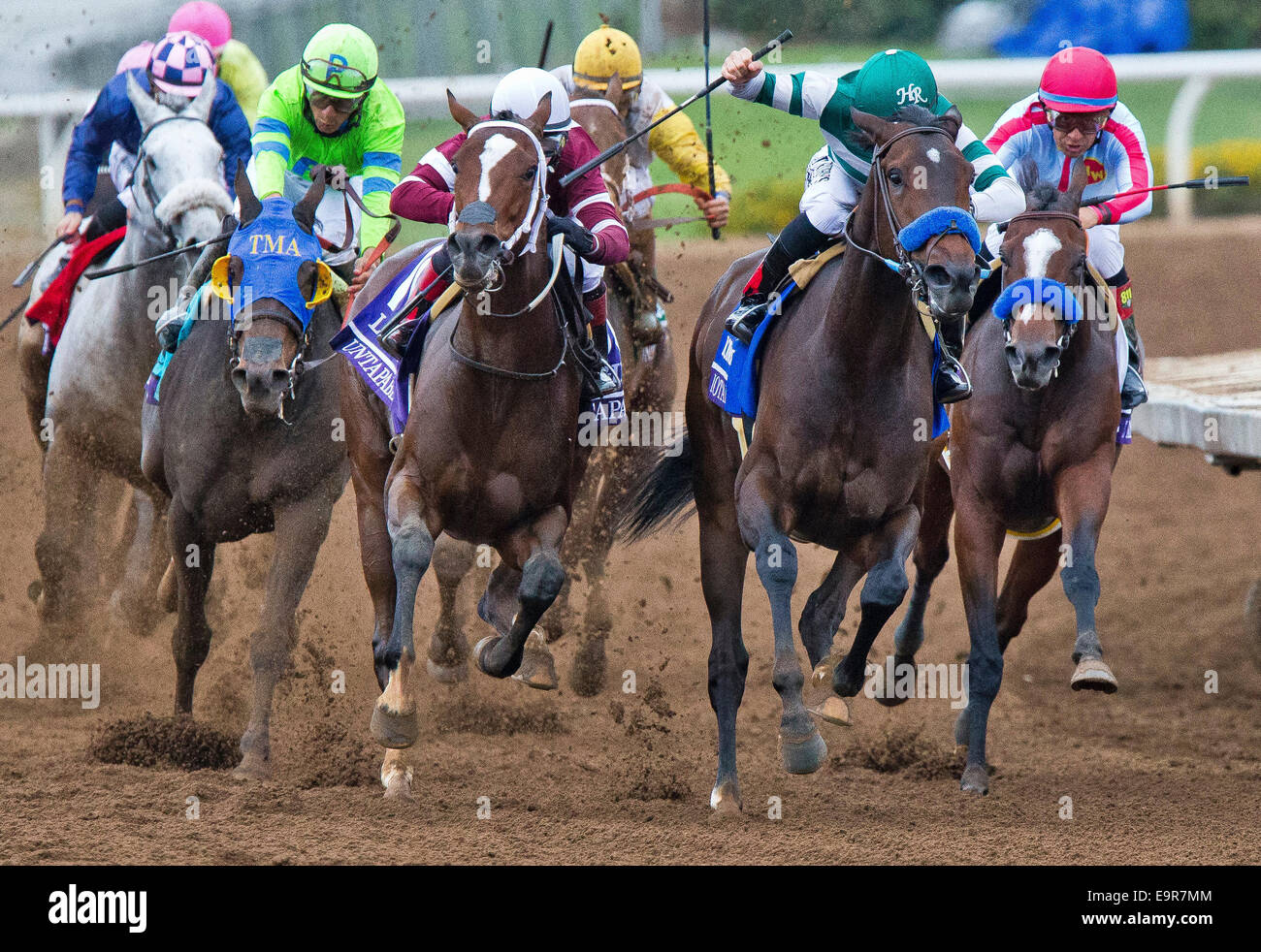 Arcadia, CA, USA. 31st Oct, 2014. October 31, 2014: Untapable (10, white cap), ridden by Rosie Napravnik and trained Stock Photo