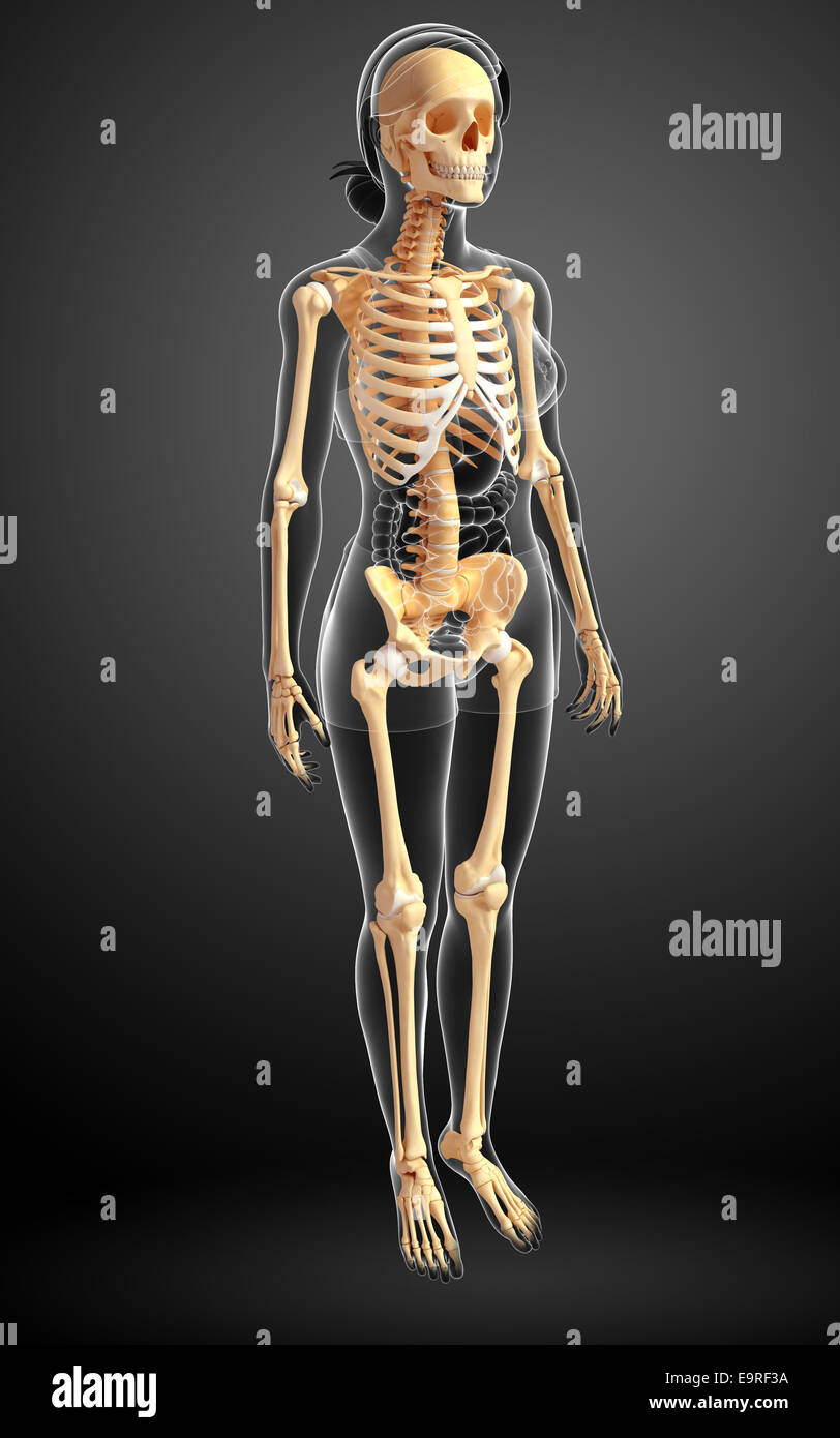 Illustration Of Human Skeleton Side View Stock Photo 74890126 Alamy