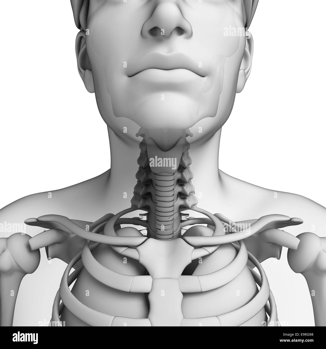 Thyroid Black and White Stock Photos & Images - Alamy